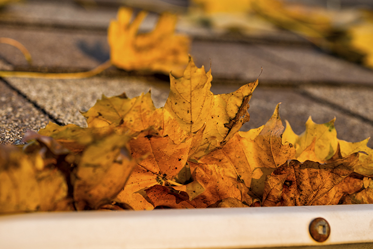Take care of rain gutters to prevent damage to your home's roof and exterior